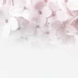 Εκλεκτής ποιότητας λουλούδια χρώματος στο μαλακό και ύφος θαμπάδων στη σύσταση εγγράφου μουριών Στοκ εικόνα με δικαίωμα ελεύθερης χρήσης