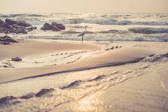 Εκλεκτής ποιότητας παραλία με έναν κολπίσκο και έναν ερωδιό Στοκ εικόνες με δικαίωμα ελεύθερης χρήσης
