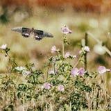 Εκλεκτής ποιότητας πεταλούδα και λουλούδια 1 Στοκ Εικόνες
