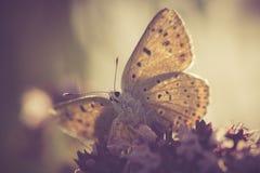Εκλεκτής ποιότητας πεταλούδα Στοκ φωτογραφία με δικαίωμα ελεύθερης χρήσης
