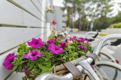 Εκλεκτής ποιότητας ποδήλατο Στοκ Εικόνες
