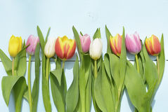 Εκλεκτής ποιότητας πράσινο μπλε υπόβαθρο aqua με τα άσπρα, κόκκινα, ρόδινα και κίτρινα λουλούδια με το κενό διάστημα αντιγράφων Στοκ Φωτογραφίες