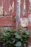 Εκλεκτής ποιότητας πόρτα Στοκ εικόνες με δικαίωμα ελεύθερης χρήσης
