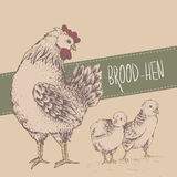 Εκλεκτής ποιότητας σχέδιο με τα κοτόπουλα ευτυχείς μητέρες ημέρας διανυσματική απεικόνιση