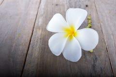Εκλεκτής ποιότητας τόνος λουλουδιών Plumeria ή frangipani στο ξύλινο πάτωμα Στοκ εικόνες με δικαίωμα ελεύθερης χρήσης