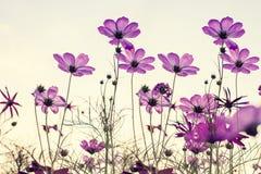 Εκλεκτής ποιότητας τόνος του λουλουδιού κόσμου Στοκ φωτογραφία με δικαίωμα ελεύθερης χρήσης