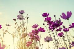 Εκλεκτής ποιότητας τόνος του λουλουδιού κόσμου Στοκ Φωτογραφίες