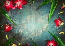 Εκλεκτής ποιότητας υπόβαθρο με τα κόκκινα λουλούδια ορχιδεών, τοπ άποψη Στοκ φωτογραφία με δικαίωμα ελεύθερης χρήσης