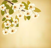 Εκλεκτής ποιότητας υπόβαθρο με το ανθίζοντας δέντρο brunch και Στοκ εικόνες με δικαίωμα ελεύθερης χρήσης