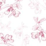 Εκλεκτής ποιότητας υπόβαθρο λουλουδιών ανθών κερασιών διανυσματική απεικόνιση
