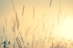 Εκλεκτής ποιότητας υπόβαθρο φύσης λιβαδιών Floral στοκ φωτογραφίες με δικαίωμα ελεύθερης χρήσης
