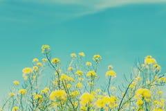 Εκλεκτής ποιότητας υπόβαθρο φύσης Στοκ Εικόνες