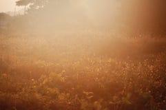 Εκλεκτής ποιότητας υπόβαθρο φύσης Στοκ Φωτογραφίες