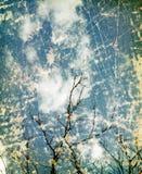 Εκλεκτής ποιότητας υπόβαθρο φύσης Grunge στοκ φωτογραφία με δικαίωμα ελεύθερης χρήσης