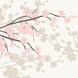 Εκλεκτής ποιότητας υπόβαθρο Watercolor με τα ανθίζοντας λουλούδια της Apple Στοκ φωτογραφίες με δικαίωμα ελεύθερης χρήσης