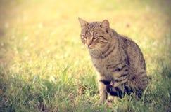 Εκλεκτής ποιότητας φωτογραφία της γάτας Στοκ Φωτογραφίες