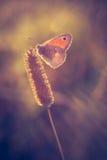 Εκλεκτής ποιότητας φωτογραφία της πεταλούδας Στοκ εικόνες με δικαίωμα ελεύθερης χρήσης