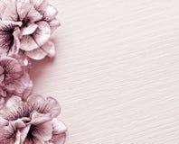 Εκλεκτής ποιότητας φωτογραφία του BG λουλουδιών Στοκ Φωτογραφίες