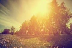 Εκλεκτής ποιότητας φύση Πάρκο, δέντρα και πικραλίδες άνοιξη ηλιόλουστο Στοκ εικόνες με δικαίωμα ελεύθερης χρήσης