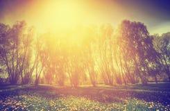 Εκλεκτής ποιότητας φύση Πάρκο, δέντρα και πικραλίδες άνοιξη ηλιόλουστο Στοκ φωτογραφίες με δικαίωμα ελεύθερης χρήσης