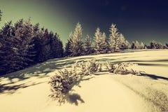 Εκλεκτής ποιότητας χειμερινό δάσος στοκ εικόνα με δικαίωμα ελεύθερης χρήσης