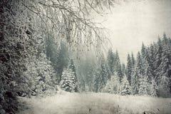 Εκλεκτής ποιότητας χιονώδη δέντρα έλατου Στοκ φωτογραφία με δικαίωμα ελεύθερης χρήσης