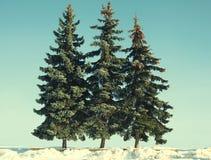 Εκλεκτής ποιότητας χριστουγεννιάτικα δέντρα φωτογραφιών Στοκ φωτογραφία με δικαίωμα ελεύθερης χρήσης
