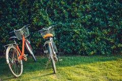 Εκλεκτής ποιότητας χρώμα ποδηλάτων με τον τοίχο δέντρων Στοκ Εικόνες