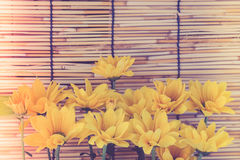 Εκλεκτής ποιότητας ύφος εικόνας και εκλεκτική εστίαση στο κίτρινο flawer του beau Στοκ Φωτογραφίες