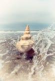 Εκλεκτής ποιότητας Conch Στοκ Φωτογραφία