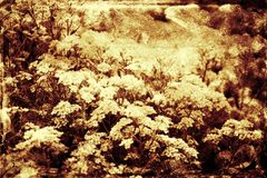 Εκλεκτής ποιότητας floral υπόβαθρο Στοκ Εικόνα