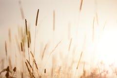 Εκλεκτής ποιότητας Floral φύση λιβαδιών το πρόωρο ηλιόλουστο πρωί στοκ φωτογραφίες