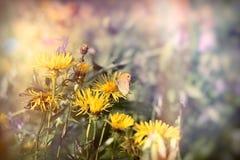 Εκλεκτική εστίαση σε λίγη πεταλούδα στο κίτρινο λουλούδι Στοκ Εικόνα