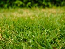 Εκλεκτική εστίαση της πράσινης χλόης Στοκ φωτογραφία με δικαίωμα ελεύθερης χρήσης