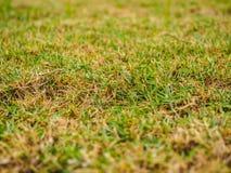 Εκλεκτική εστίαση της πράσινης χλόης Στοκ Εικόνες