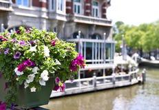 Εκλεκτική εστίαση των λουλουδιών σε ένα δοχείο λουλουδιών Στοκ Εικόνες