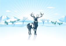 ελάφια στο χειμώνα Στοκ Φωτογραφία