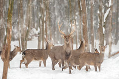 Ελάφια Στοκ φωτογραφία με δικαίωμα ελεύθερης χρήσης