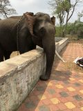Ελέφαντας από το πάρκο Dubare Στοκ Εικόνα
