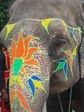 ελέφαντας Ινδία Jaipur Στοκ Εικόνες