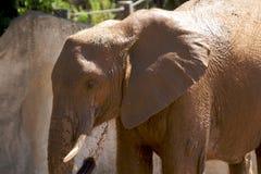 ελέφαντας λουτρών Στοκ Εικόνες