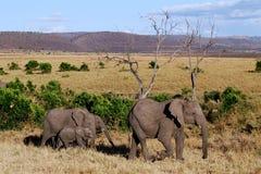 Ελέφαντας με τρία μωρά Στοκ εικόνες με δικαίωμα ελεύθερης χρήσης