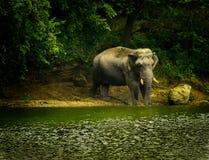 ελέφαντας μόνος στοκ φωτογραφία με δικαίωμα ελεύθερης χρήσης