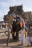 Ελέφαντας ναών - Thanjavur - Ινδία στοκ εικόνα