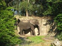 Ελέφαντας σε ένα δάσος Στοκ Εικόνες