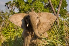 Ελέφαντας στο εθνικό πάρκο Ruaha, Τανζανία Στοκ φωτογραφία με δικαίωμα ελεύθερης χρήσης