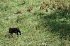 Ελέφαντας. Τανζανία, Αφρική Στοκ εικόνες με δικαίωμα ελεύθερης χρήσης