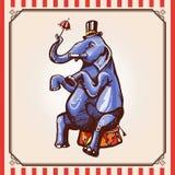 Ελέφαντας τσίρκων Στοκ φωτογραφίες με δικαίωμα ελεύθερης χρήσης