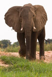 ελέφαντας στοκ φωτογραφία
