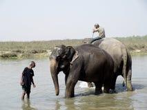 ελέφαντας mahout στοκ εικόνα με δικαίωμα ελεύθερης χρήσης